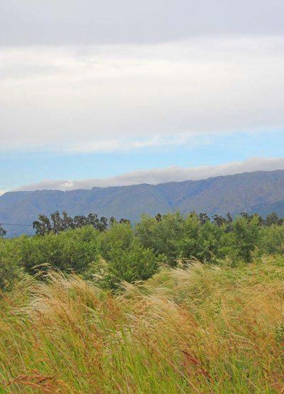 Cip-Inmobiliaria-Terreno-en-venta-en-Los-Molles-windhills-01